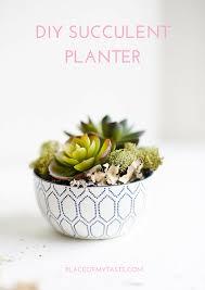 succulent planters for sale diy succulent planters