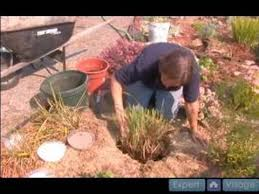 how to propagate ornamental grasses how to adjust plant depth when
