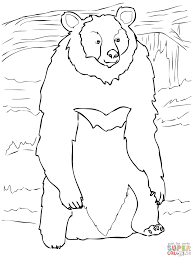 asia black bear standing up coloring page free printable