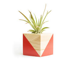 Small Desk Plants by Modern Air Planter Free Shipping Red Air Plant Holder Plant