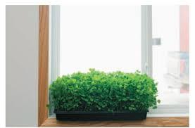 Indoor Kitchen Find Your Indoor Kitchen Garden Quarto Homes
