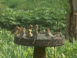 native wisconsin plants native plants u0026 birds stopover initiative