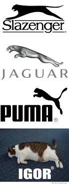 Puma Meme - jaguar puma igor cool pinterest pumas funny cat memes and cat