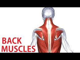 Anatomy Of Human Back Muscles Back Muscles Anatomy Trapezius Latissimus Rhomboid Anatomy