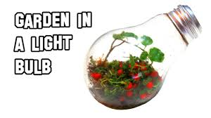 in light bulbs how to make a garden in a light bulb youtube