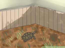 how to care for your box turtle 14 steps with pictures