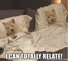 Dog In Bed Meme - i can totally relate dog in bed meme generator