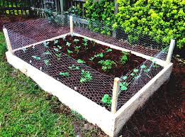 small easy vegetable garden video and photos madlonsbigbear com