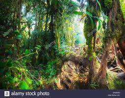 tropical rainforest native plants fantasy mystical tropical mossy forest with amazing jungle plants
