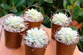 flower pot favors flower pot wedding favors 125 unique decoration and cool wedding