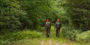 rhode island forest images Forest stewardship program rhode island department of jpg