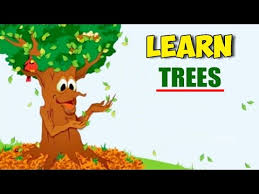 learn trees pre trees names and educational