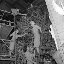 Decorative Christmas Tree Ladders by Four Ladies On Scaffolding And Ladders Decorating Christmas Tree