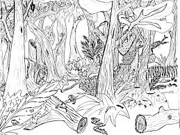 nature coloring pages to print nature coloring pages pinterest