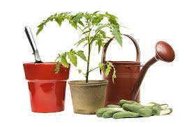 small potted plants gardening tools and small potted plants 1469 980 transprent png free