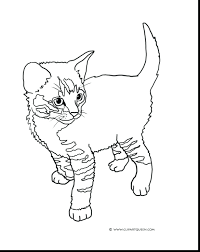 kitten coloring pages print free cat cute printable class