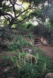 california native plants landscaping native plants terra ferma landscapes