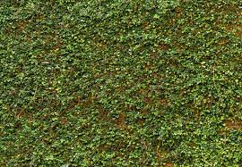brewster home fashions ivy 100 x 144 default name