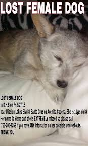 Lost Dog Meme - lost dogs in indio ca lost my doggie
