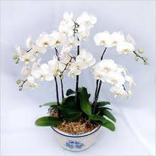Orchid Delivery Vyshop Com The Largest Vietnam Flowers Delivery Network Vietnam