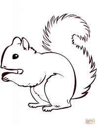 squirrels coloring pages aecost net aecost net