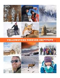 yellowstone forever institute catalog winter 2017 18 by