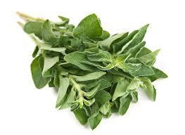 origan cuisine cuisine marjolaine plante cuisine marjolaine plante cuisine