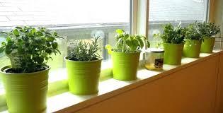 indoor herb gardens window box herb garden kit indoor herb garden kit window plant box