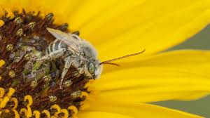 plants for native bees 5 simple tips to turn your yard into pollinator paradise u2013 cool