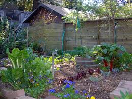 Garden With Trellis Various Plants And Flowers Backyard Garden House Design With