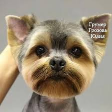 yorkie hair cut chart yorkie face head from homeless to royalty grooming tips