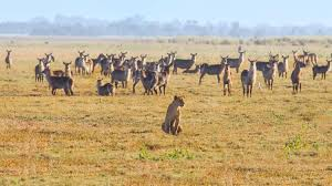 safari mozambique safari gorongosa national park
