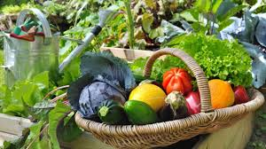 best way to supply fresh vegetables during the winter season