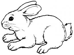 free coloring pages free printable rabbit coloring pages for kids