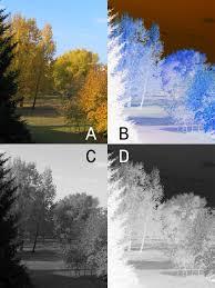 negative photography wikipedia