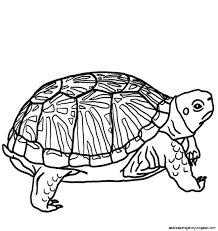 turtle clipart black and white wallpapers gallery cliparting com