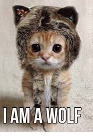 Wolf Memes - i am a wolf meme on me me