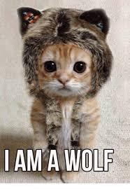 Wolf Meme - i am a wolf meme on me me