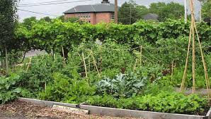 planting a vegetable garden in las vegas the garden inspirations