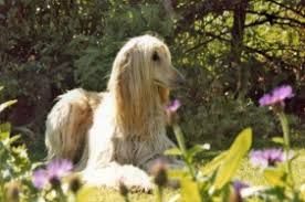 afghan hound blonde hunky tom hiddleston hanging out with a few new blondes