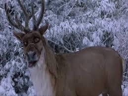 comet reindeer 2