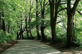 free photo tree forest leaves shade shadow free image on