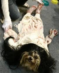scariest costumes scariest dog costumes goldenacresdogs