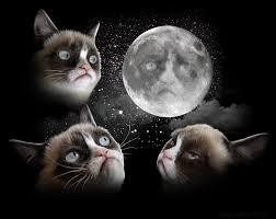 3 Wolf Moon Meme - three tard moon by garyckarntzen on deviantart favorite images