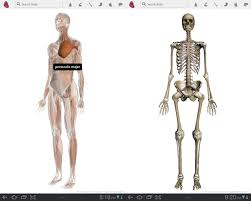 Google Body Anatomy Google Body Discover What Your Made Of In 3d Android