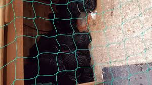plant support netting 2m high x 30 metres long 4 100mm