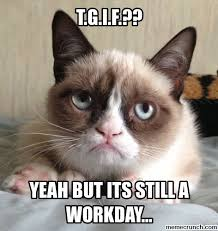 Friday Cat Meme - image result for grumpy cat isis grumpy cat favs pinterest