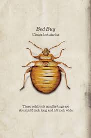 Small Black Bugs In Bed Bug Book Western Exterminator