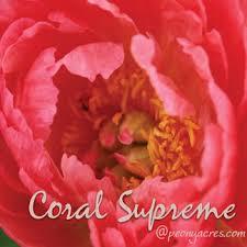 Wholesale Peonies Coral Wholesale Peonies May June American Grown Peony Farm