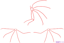 how to draw dragon wings step by step dragons draw a dragon